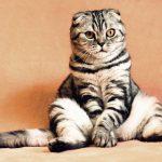 Wat is het effect van kattenspeeltjes voor jouw kat?